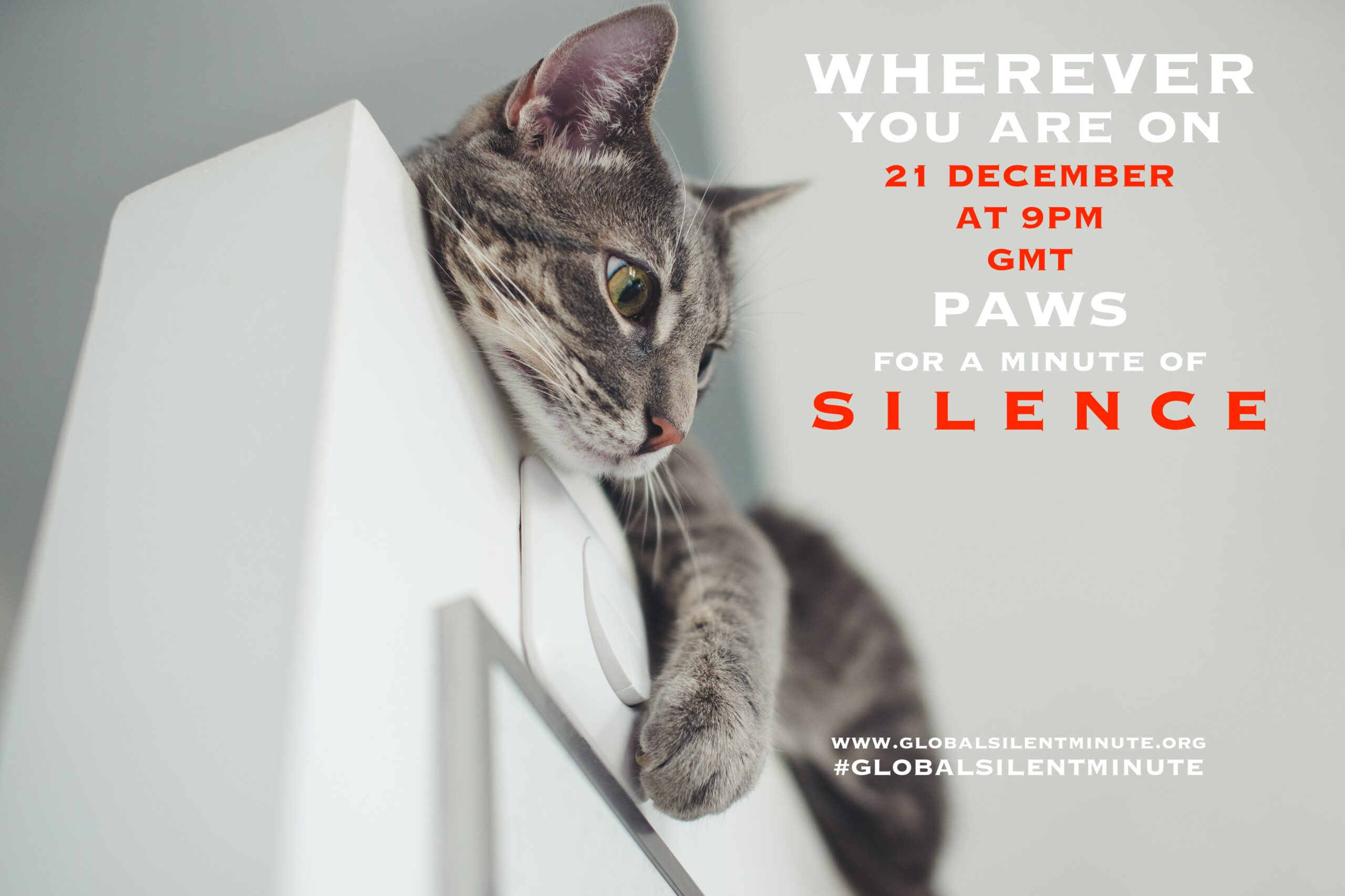 13.Paws for a minute of Silence